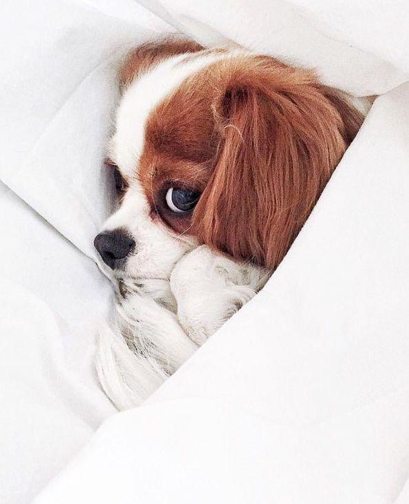 Pour grappiller quelques minutes de sommeil en plus, il n'est pas interdit d'user de ses charmes...