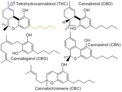 Cannabinoids 101 | Medicinal cannabinoids can be kind of confusing. When you go to the dispensary, the strains will usually have the percentages of the subclasses of several cannabinoids listed. But do you really know what CBC, THC and CBN mean? And how are they relative to pain relief and therapeutic benefits? Here's a 101 crash course.