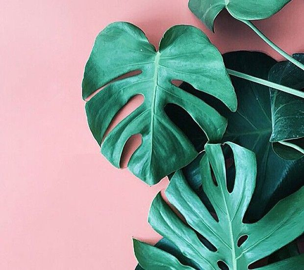 A combinação de rosa e verde na decoração da casa