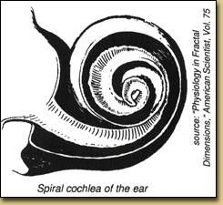 "Fibonacci spiral structure of the human ear...  ""All human senses, including hearing, touch, taste, vision and pain receptors have not only spiral physiology, but also response cures that are logarithmic (having a Fibonacci structure)"" - Frederick A Hottes"
