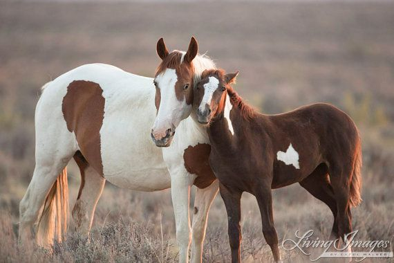 Picasso's mare and foal, I call this Wild Cuddle in Sand Wash Basin  www.LivingImagesCJW.com