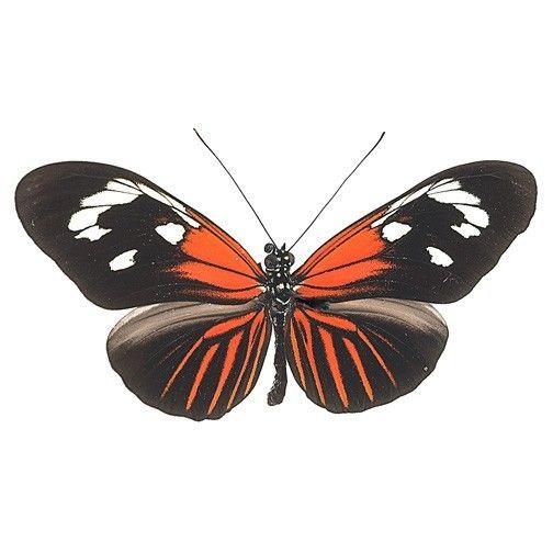 Best Butterfly Decals Indoor Outdoor Images On Pinterest - Butterfly vinyl decals
