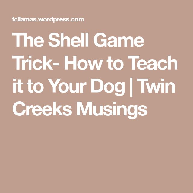 The Shell Game Trick- How to Teach it to Your Dog | Twin Creeks Musings