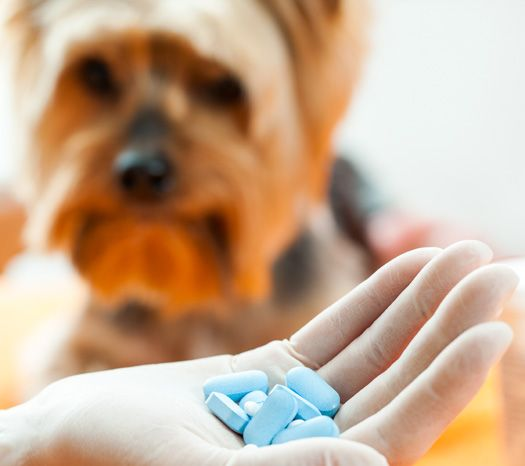 Natural Hookworm Treatment For Dogs