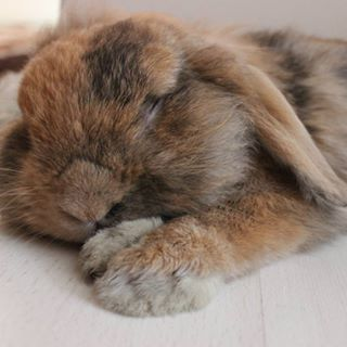 A busy #Bunny Saturday has left us all hopped out!! Time to recharge :P