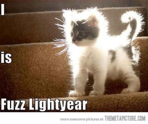 funny animals pictures with captions (56 pict) Funny Pictures #compartirvideos #funnypictures #videowatsapp