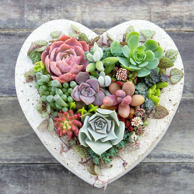 "1,423 curtidas, 30 comentários - Charming Succulents | Perth WA (@charmingsucculents) no Instagram: ""Love love love this heart planter from my lovely IG friend @codychilli. It's a perfect home for my…"""