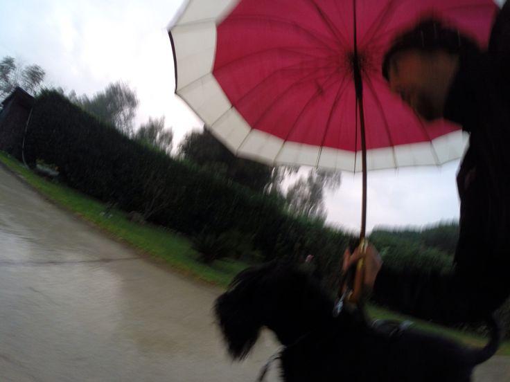 #seguifido #scattinascosti #sempre live giretto veloce con la pioggia