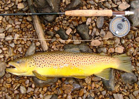 Brown Trout Lures – occurso.info