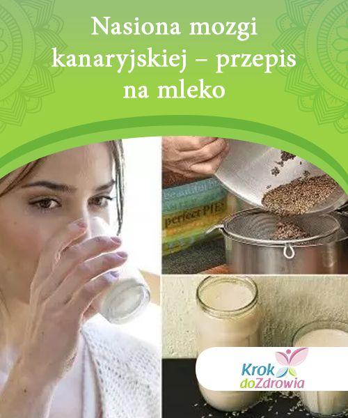 Nasiona mozgi kanaryjskiej – przepis na mleko   Nasiona mozgi kanaryjskiej są bogate w niezbędne składniki odżywcze i przynoszą ogromne korzyści zdrowotne. Dowiedz się jak przyrządzić z nich mleko.