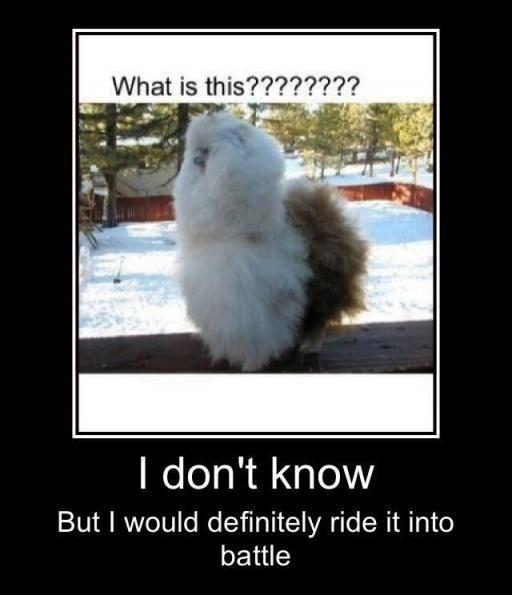 Llama (or maybe alpaca!) funny