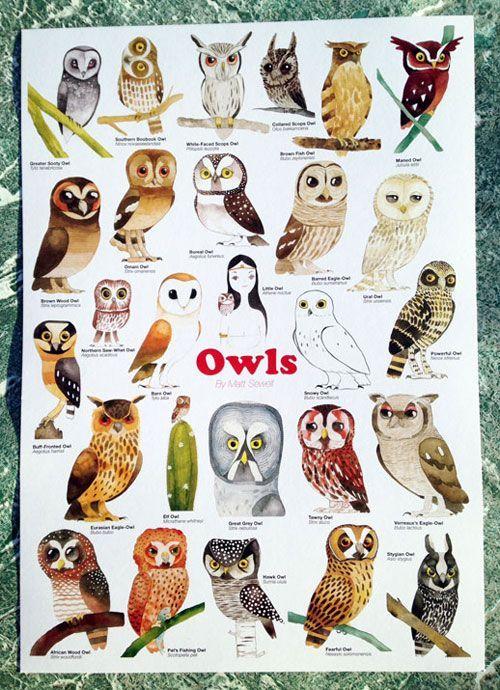Owls poster Pinned by www.myowlbarn.com