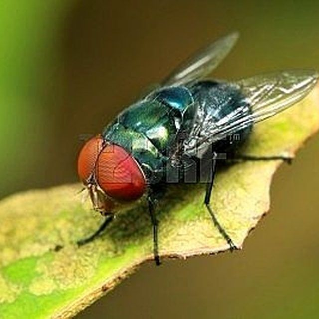 Kill Flies/insects Quickly Without Toxins