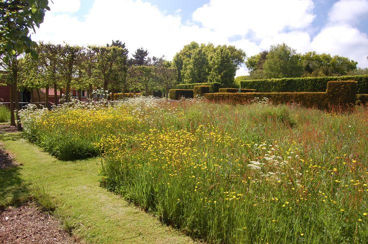 Wildflower area East Ruston Old Vicarage gardens, Norfolk