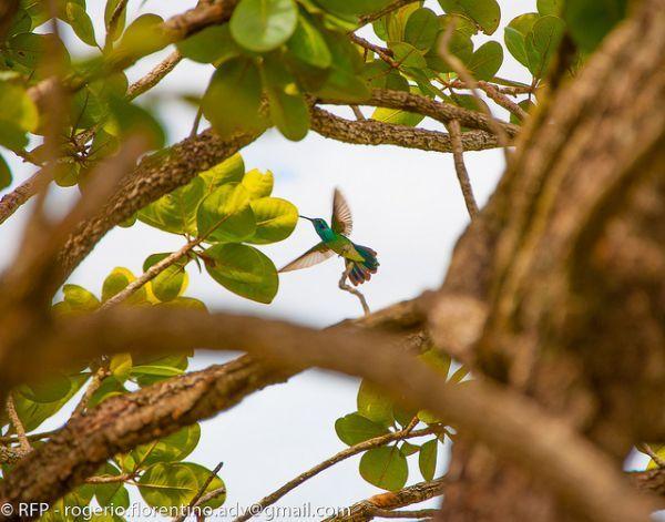 """""""BIG DAY"""" : Brasil terá dia dedicado à observação de pássaros livres na natureza - Infonatura"""