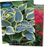 Bluestone Perennials Catalog Request