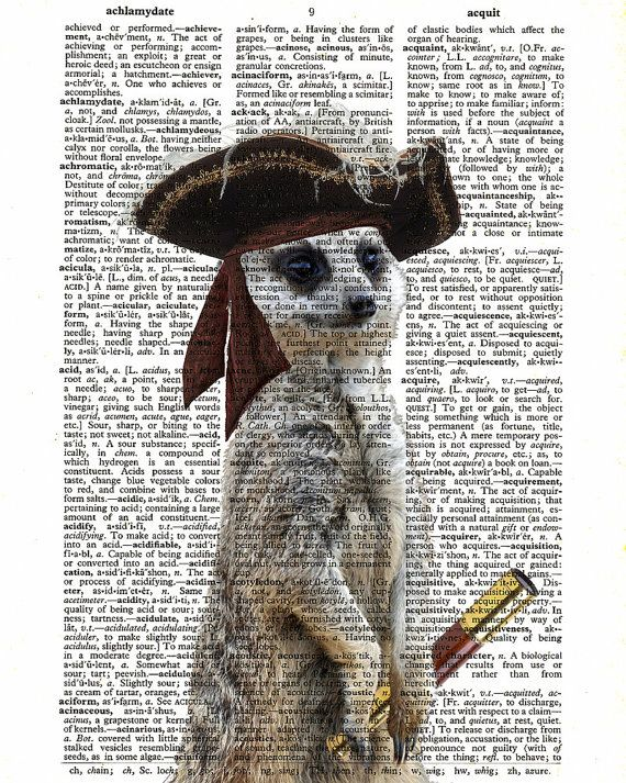 Meerkat Print Steampunk Pirate Dictionary Paper by TheCuriousHat