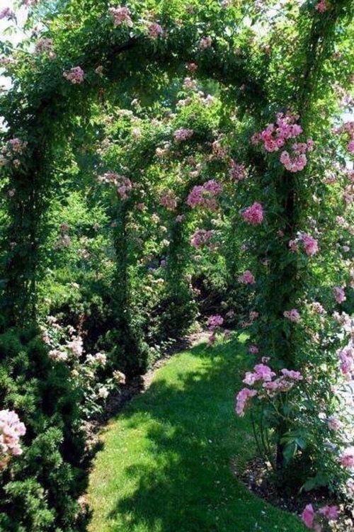 Best 25 david austin roses ideas on pinterest david for Free rose garden designs