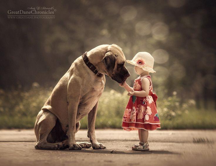 #собака #ребенок #дети #немецкий дог Photographer: Андрей Селиверстов