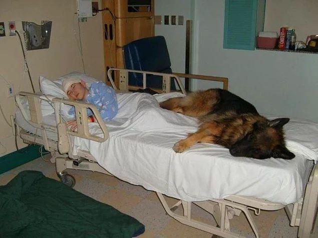 Если бы только люди могли любить как собаки, мир стал бы раем.