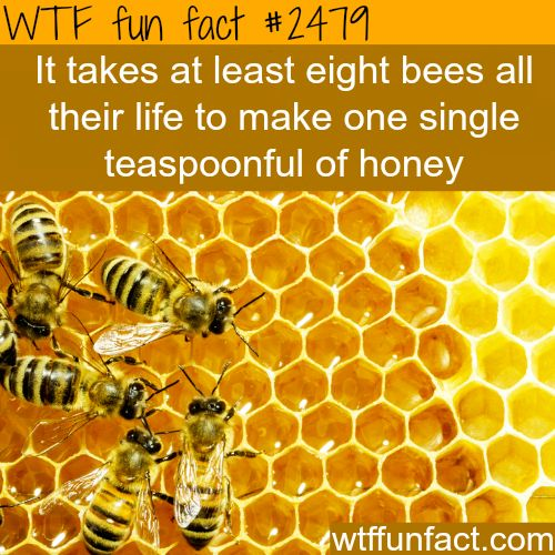 8 bees make a spoon of honey in their life time - this ...