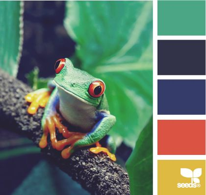 color hop J's room Tree-Frog, Trees Frogs, Tree Frogs, Colors, Costa Rica, Costa Rica, Central America, Red Eye, Animal