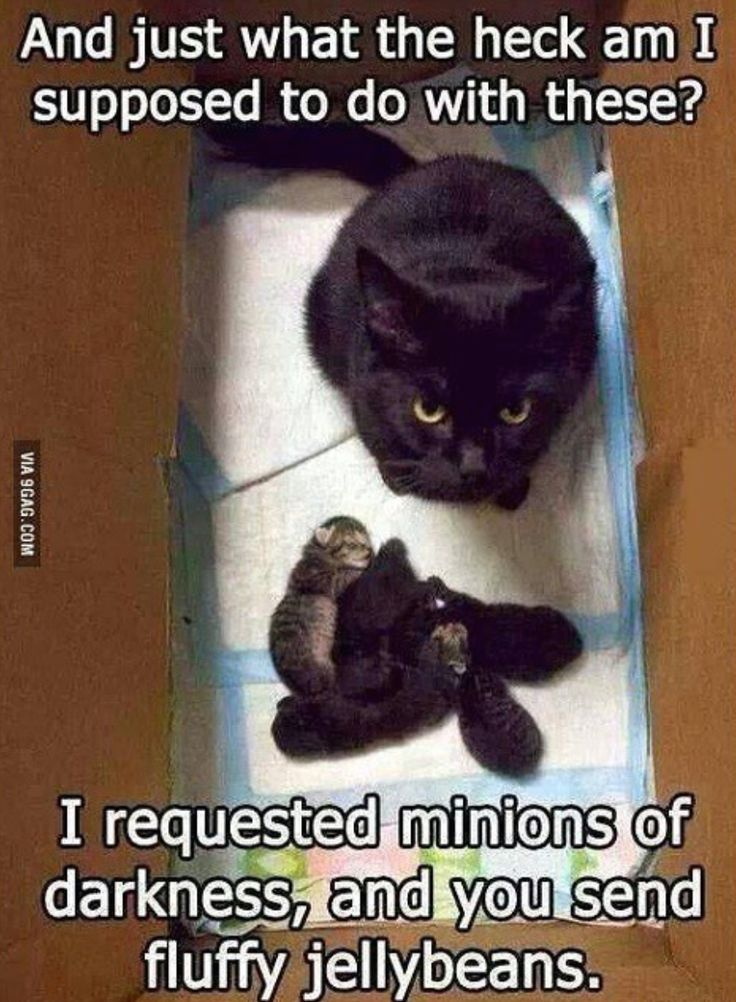 Best Animals Images On Pinterest Bacon And Notes - 49 hilarious pictures people animals