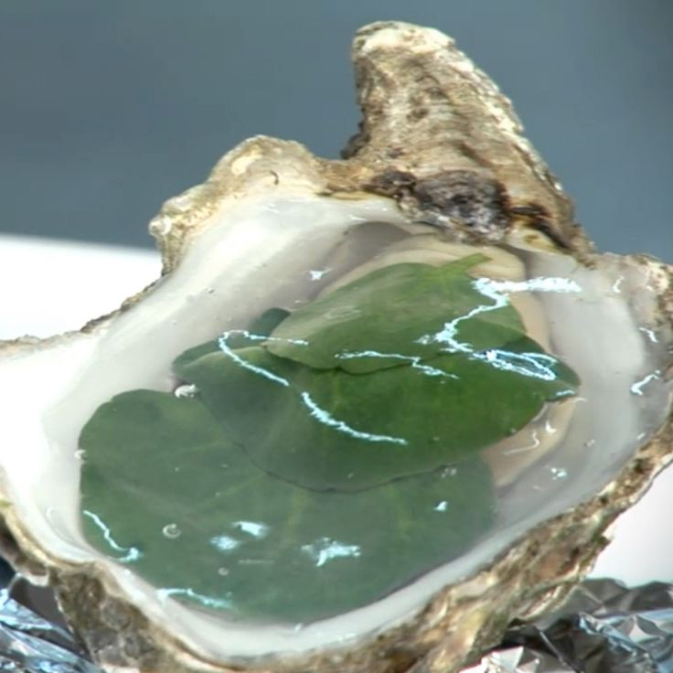 Marc Meneau partage avec nous une recette de Noël originale qu'il affectionne partciculièrement : les huîtres en gelée d'eau de mer.