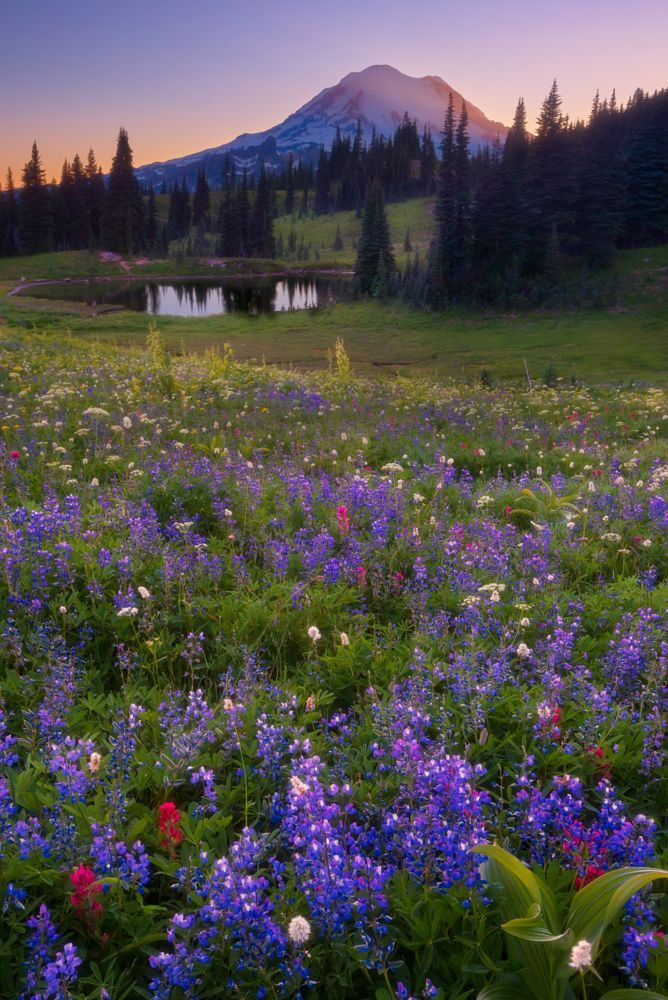mount rainier and wild flowers by donald luo on 500px