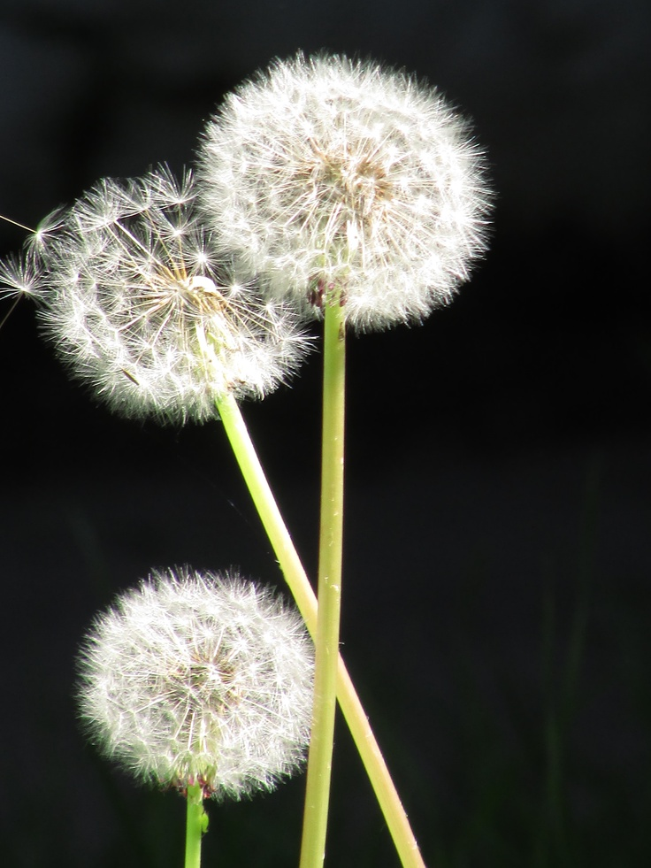 Sopla delicadamente y deja que el viento se las lleve junto a tus penas y miedos