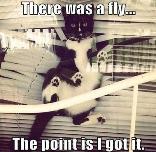 Destructive Fly Swat LOL!