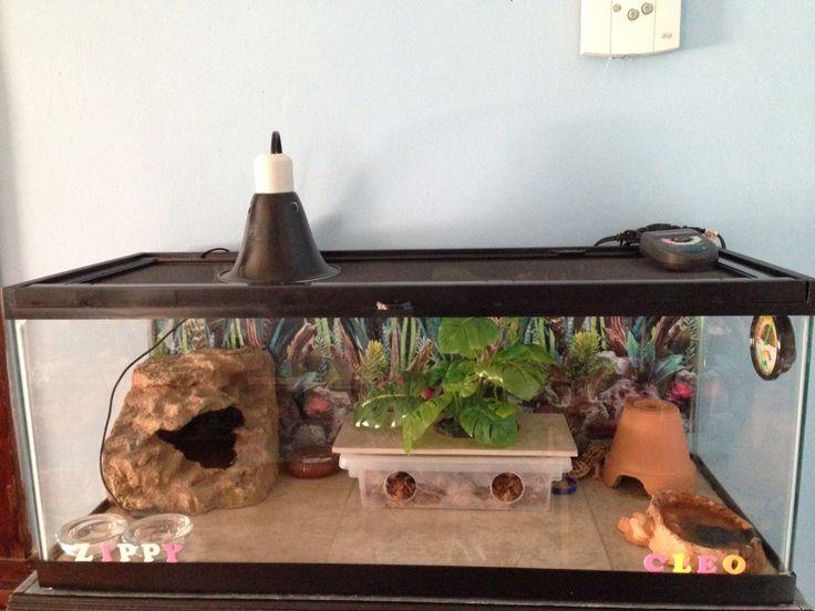 My leopards geckos habitat. Zippy and Cleo.