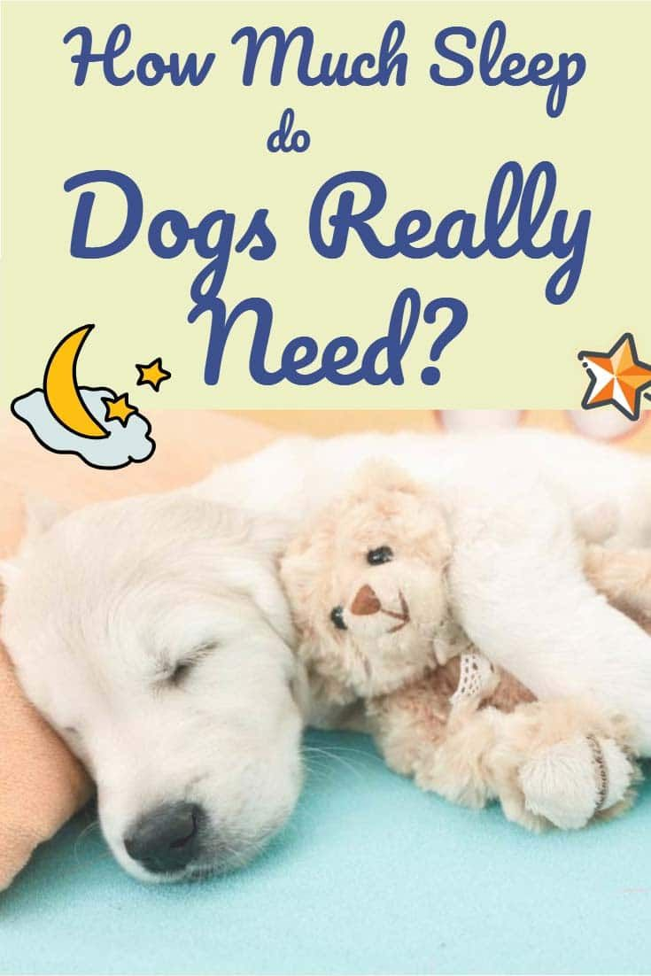 How Much Do Dogs Sleep And How Many Hours Does Fido Really Need Per