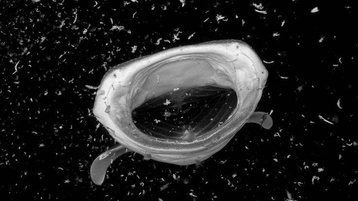 eDNA schwirrt überall herum: Walhaie findet man auch im Wasserglas