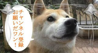 """""""O Grito do Bicho"""": Reação de cão ao ver sua caixa ficar menor"""