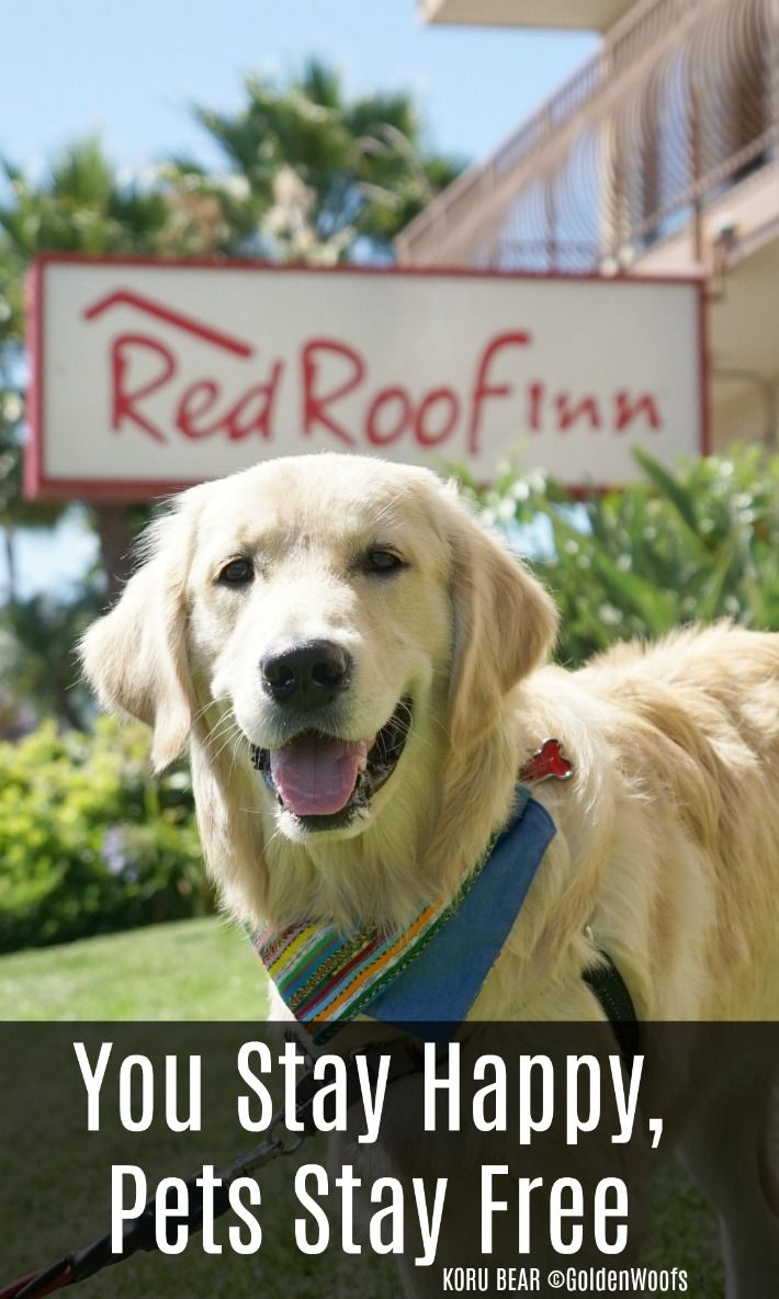 Red Roof Inn You Stay Happy Pets Stay Free Redroofluvspets Pet