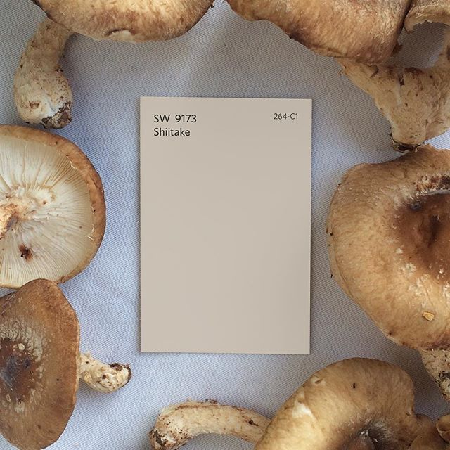 Shiitake sw 9173 is an earthy neutral tone perfect for for Paint colors neutral tones