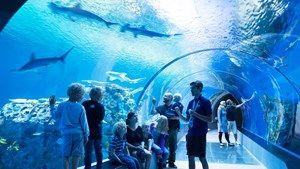 National Aquarium Denmark, Den Blå Planet, Copenhagen