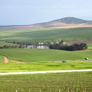 Org de Rac Organic Wine Estate in Piketberg - Are you looking for top quality organic wines? Drive out on the N7 towards Piketberg. The sight of the vineyards on the hillside evokes a hearty welcome, the taste of fine wine, good clean country air and life in abundance. #orgderac #organicwineestate #organicwine #piketberg