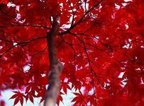 красный цвет: 16 млн изображений найдено в Яндекс.Картинках