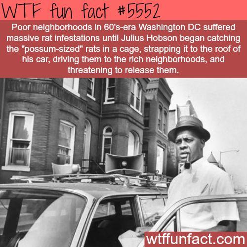 Massive rat infestation in 60′s-era Washington DC - WTF fun facts