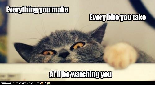 funny cat pictures - Lolcats: Ai gotz mai eyes on u & mai paw redi