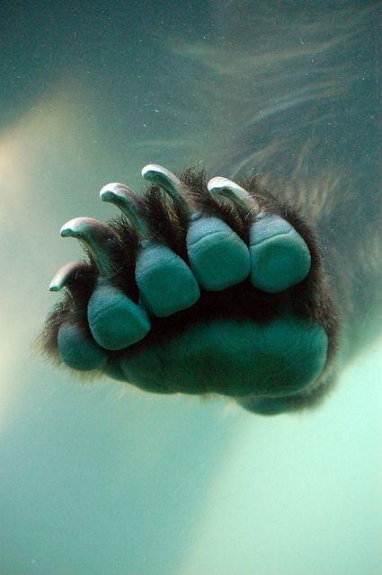 big foot. by aquietstrength, via Flickr