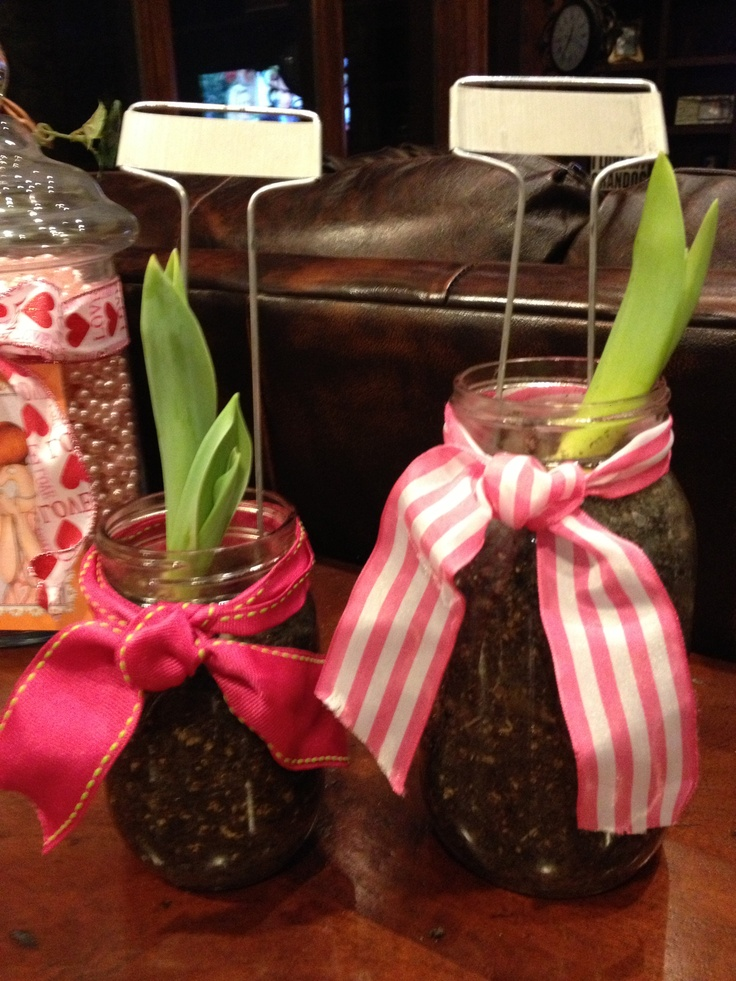 Tulips planted on mason jars.
