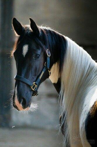 Gorgeous horse!
