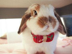 Sweet rabbit CUTE!!!!!!!!!!! :3