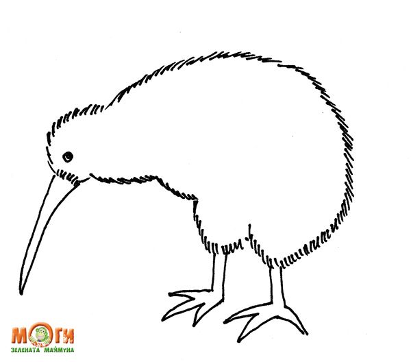 Kiwi bird coloring page kiwina door art pinterest for Kiwi bird coloring page