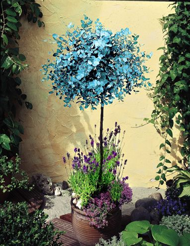 Insect repellent patio planter - reader offer | Home, Plants | Amateur Gardening Amateur Gardening