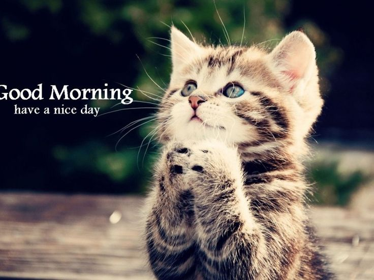 4976f9c074efb8c1e66a126f311e2872 good morning cat morning memes best 25 good morning meme ideas only on pinterest sexy morning,Cute Have A Good Day Memes
