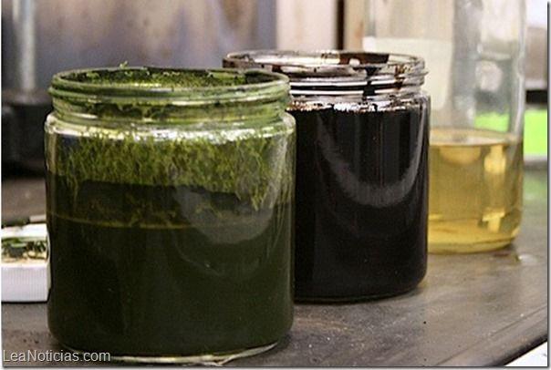Este proceso convierte algas en petróleo crudo en una hora - http://www.leanoticias.com/2014/01/13/este-proceso-convierte-algas-en-petroleo-crudo-en-una-hora/